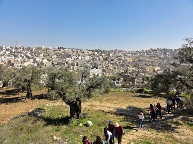 How big is Palestine?