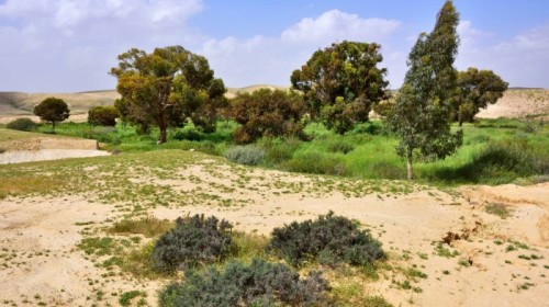 The State of the Natural Environment in Palestine by Dana Visalli